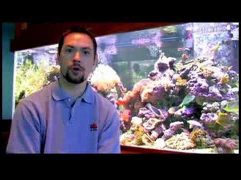 Pet Fish Care : How Do I Get Rid of Bubbles in My Fish Tank?