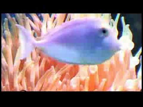 Pet Fish Care : How to Maintain a Saltwater Tank
