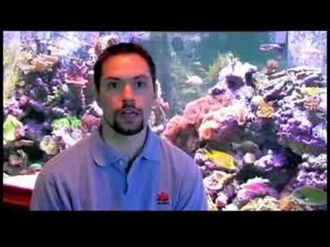 Pet Fish Care : When Is It OK to Remove Fish From an Aquarium to Clean?