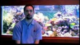 Pet Fish Care : Where to Buy Discount Fish Tank Supplies