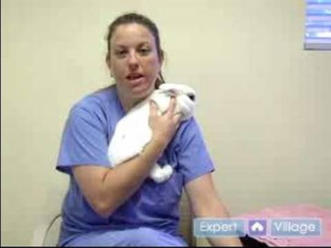 Pet Rabbit Care : Buying Your Pet Rabbit