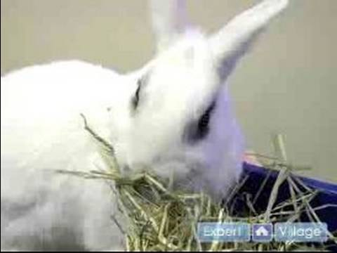 Pet Rabbit Care : How Train Your Rabbit to Use a Litter Box