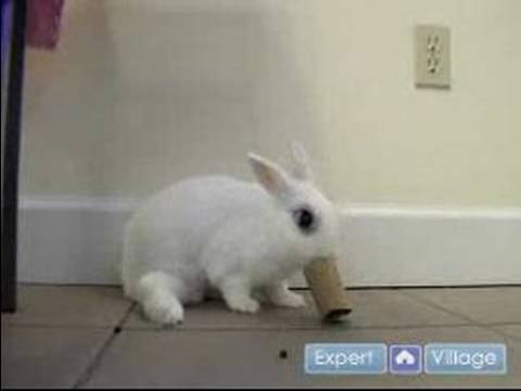Pet Rabbit Care : Rabbit Chew Toys