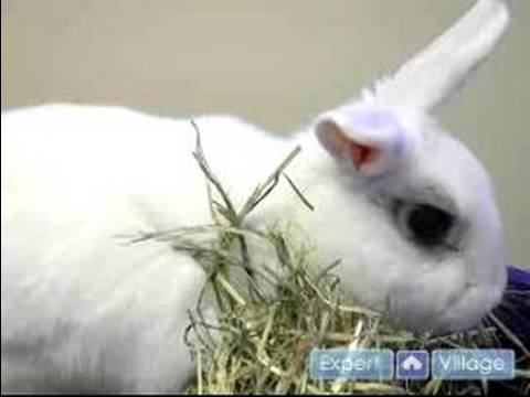 Pet Rabbit Care : Signs Your Pet Rabbit is Sick