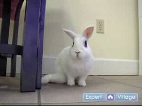 Pet Rabbit Care : Why You Shouldn't Give Pet Rabbits as Easter Presents