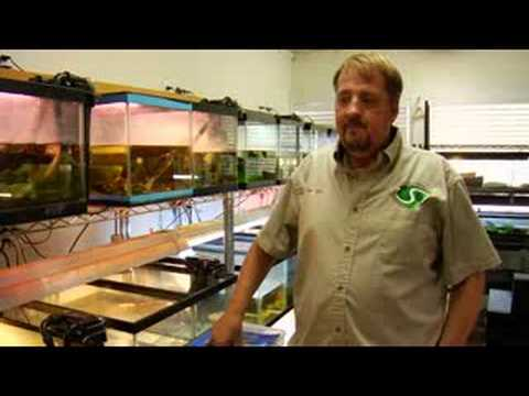 Pet Turtle Care : Setting Up a Turtle Tank