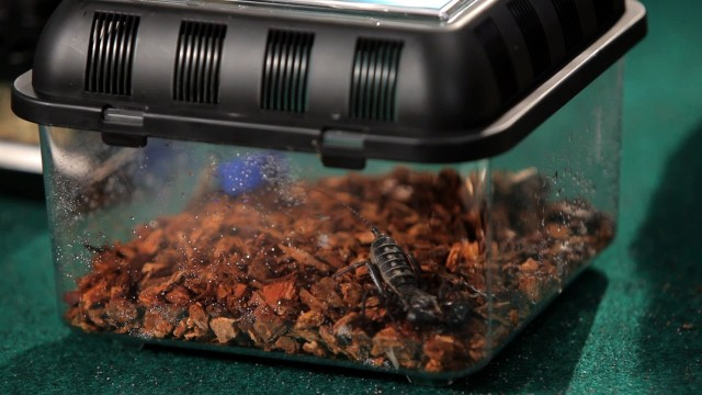 Pick & Set Up Substrate & Hide Area | Pet Tarantulas