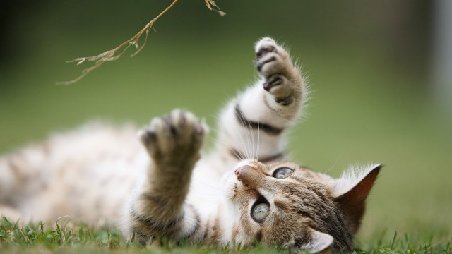 Should You Give Your Cat Catnip? | Cat Care