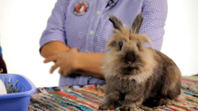 Should Your Rabbit Live Free-Range? | Pet Rabbits