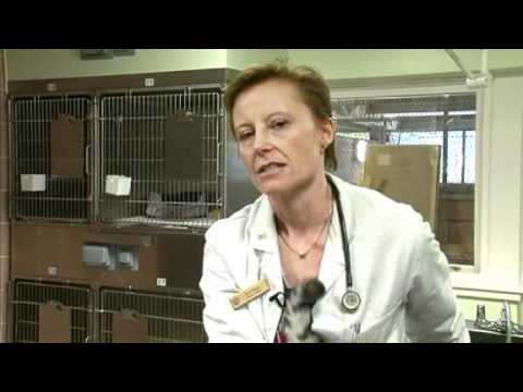Vet School – Pet care: keep your cat healthy and safe