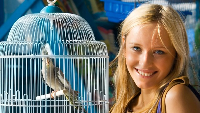 What Are the Best Apartment Birds? | Pet Bird