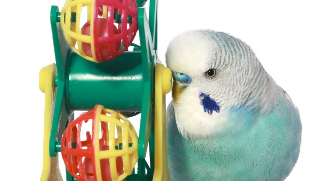 What Are the Best Bird Toys? | Pet Bird