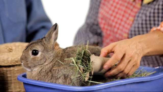 What Kinds of Toys Do Rabbits Like? | Pet Rabbits