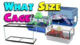WHAT SIZE CAGE? – Minimum Hamster Cage Sizes