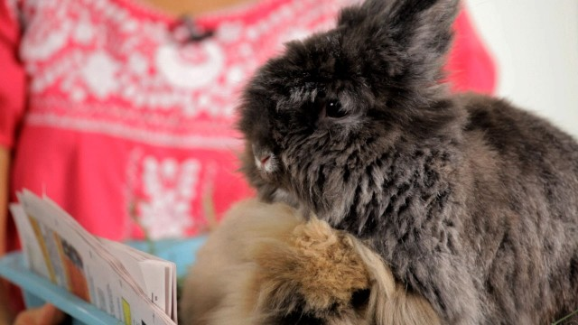 What to Consider before Buying a Rabbit | Pet Rabbits