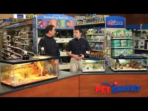 Why Reptiles Make Good Pets – PetSmart