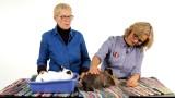 Are Rabbits Low-Maintenance Pets?   Pet Rabbits