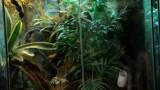Best Decorations for a Terrarium | Pet Tarantulas