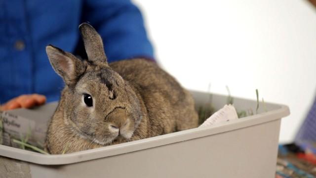 Can You Keep a Wild Rabbit as a Pet?   Pet Rabbits