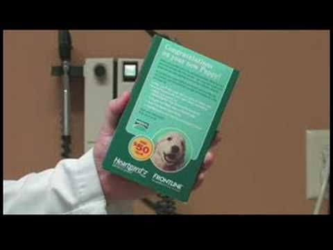 Dog Care Tips : How to Prevent Worms in Dogs