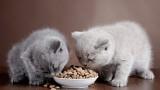 Dry Cat Food vs. Wet Cat Food   Cat Care