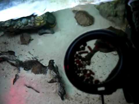 Feeding my turtle tank + food tips