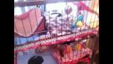 Ferret Cage (Mansion) Tour