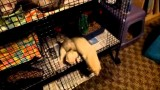 Ferret owning tips:  Supplies – Part 1 of 2