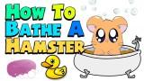 HOW TO BATHE A HAMSTER!