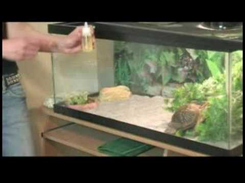 How to Care for Box Turtles : Box Turtle Diet