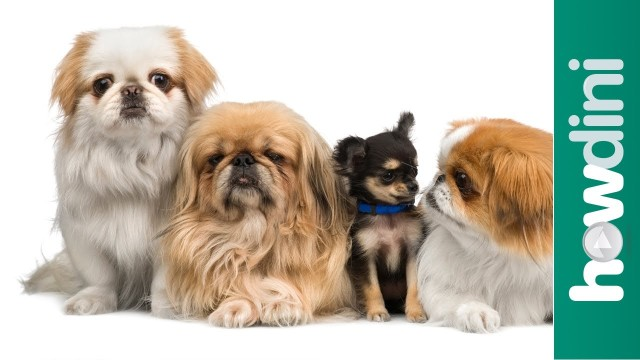 How To Choose a Puppy: Tips on How to Pick a Puppy