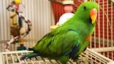 How to Clean a Birdcage | Pet Bird