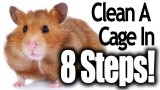 How To Clean a Hamster Cage (In 8 Easy Steps)