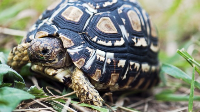 How to Clean a Land Turtle Tank | Pet Turtles