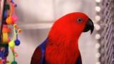 How to Groom a Bird | Pet Bird