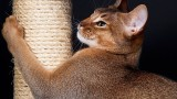 How to Keep Cat from Scratching Furniture   Cat Care