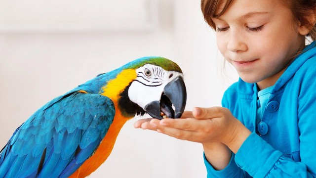 How to Keep Your Bird Safe | Pet Bird