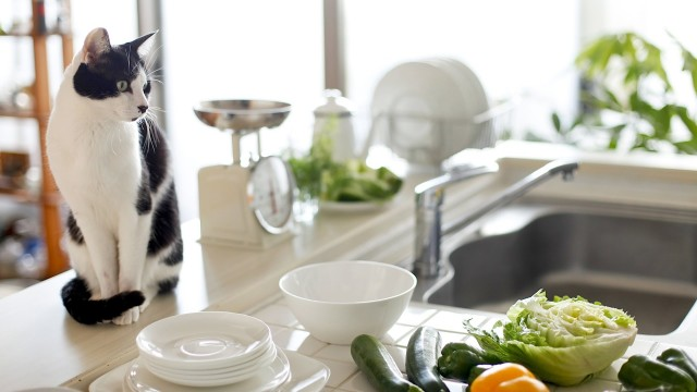 How to Keep Your Cat Off Counters   Cat Care
