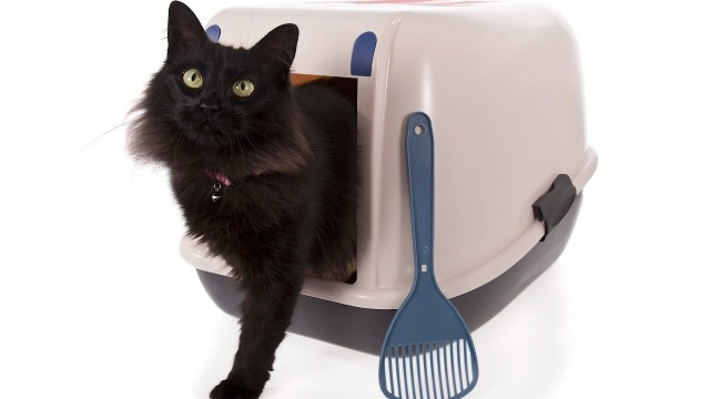 How to Litter Box Train Your Cat   Cat Care