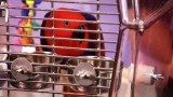 How to Pick a Birdcage | Pet Bird