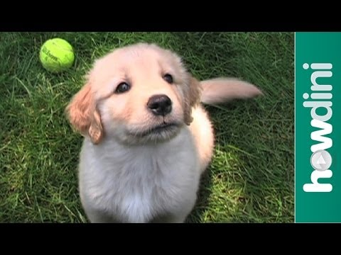 How to pick a healthy puppy – Tips to choosing a healthy dog