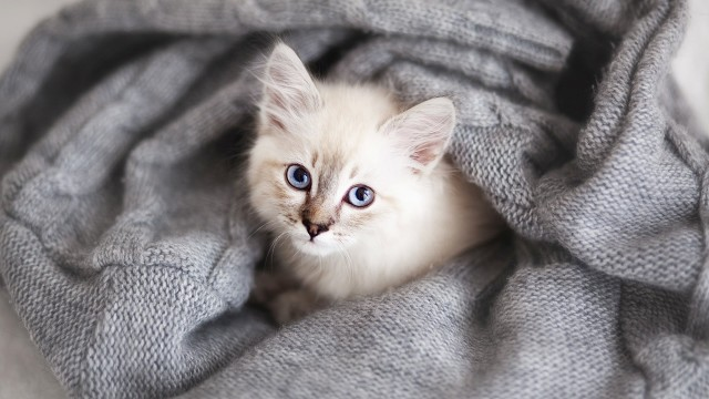 How to Prevent a Cat from Spraying   Cat Care