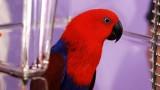 How to Set Up a Birdcage | Pet Bird