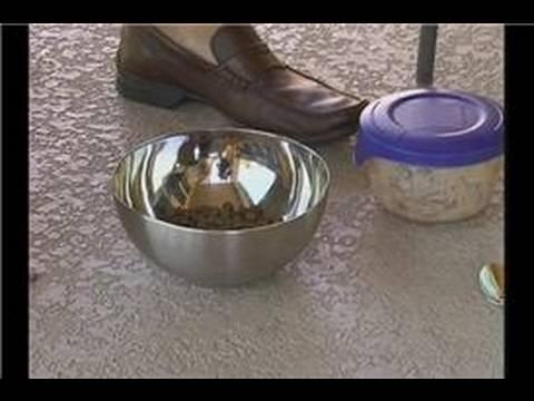 How to Take Care of a Dog : How to Feed a Dog or Puppy