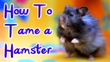 HOW TO: TAME A HAMSTER *HD*