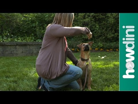 How to Train a Puppy to Sit and Stay – How To Train Your Dog