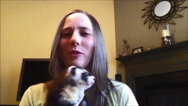 Introduction to ferret training