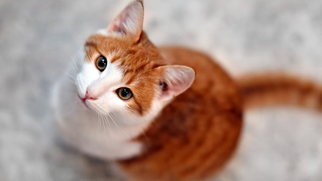 Is It Safe to Let Your Cat Go Outside?   Cat Care