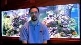 Pet Fish Care : Beginner Saltwater Aquarium Setup