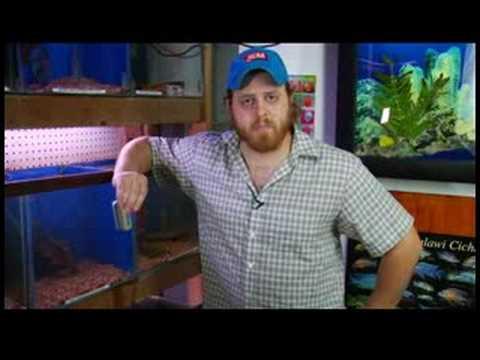 Pet Fish Care : How to Build an Aquarium